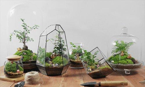 """สวนขวดแก้ว-""""Kamin""""-งานอดิเรกทำเงิน-ย่อสวนสวยใส่ขวดแก้ว-1"""