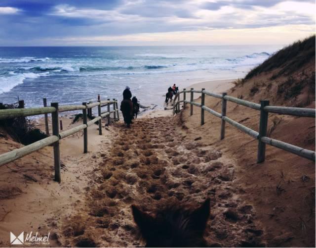 冬天宅家?Out了!隆冬在墨尔本骑马漫步海滩!-澳洲唐人街