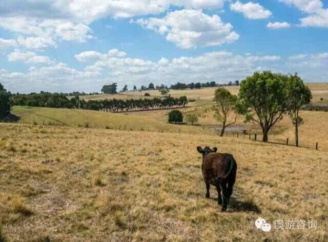 还在到处淘房?Out了!看看这些澳洲正在出售的农场吧!-澳洲唐人街