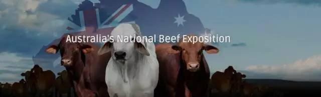 哈哈,牛!毎年10万头澳洲活牛将乘豪华游轮到中国-澳洲唐人街