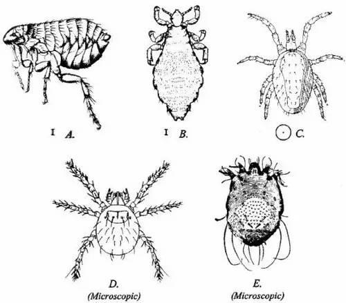 手绘3d蚂蚁步骤大图