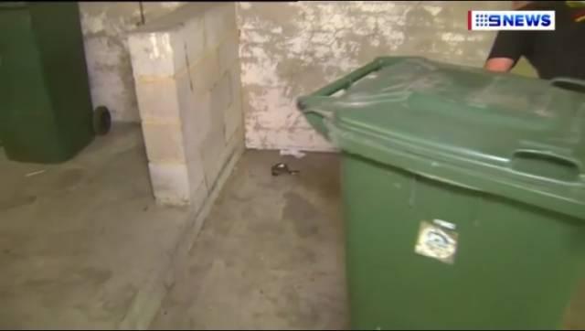 防不胜防!2米毒蛇搭顺风车跑到CBD,把Flinders一群人吓呆了-澳洲唐人街
