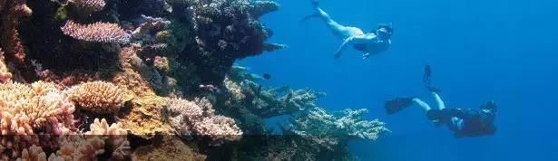 印度洋中的澳洲海岛罗特尼斯-极致的蓝&白-澳洲唐人街