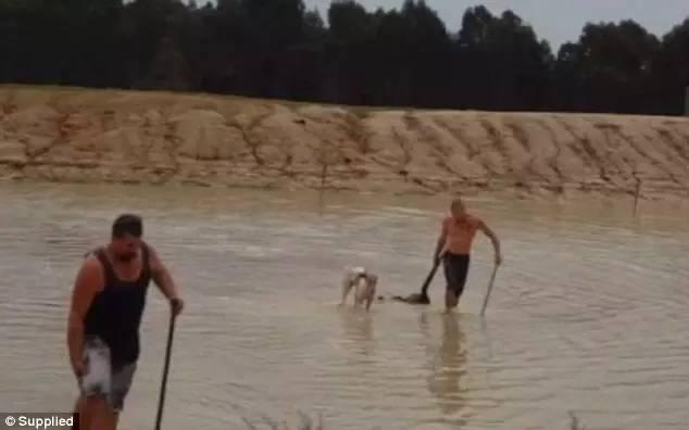 澳男子稱因太穷想猎杀一隻袋鼠加餐,结果因为手段太残忍,被判坐牢一年!-澳洲唐人街