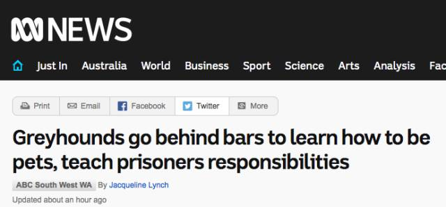 暖心:为了幫助这帮重刑犯,澳洲政府把一群猎犬送進监狱-澳洲唐人街