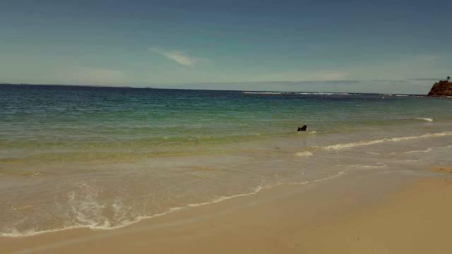 慎入:少年去墨尔本海边玩,上岸时发现双腿被不明生物咬的鲜血淋淋-澳洲唐人街