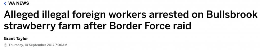草莓農場200多名勞工吃飯吃到一半遭突擊檢查,36人持旅遊簽和過期簽證-澳洲唐人街