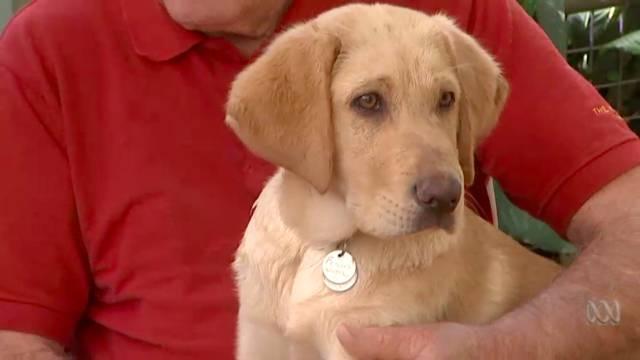 澳洲老夫妻退休後開始養狗,一養就是18隻!原因讓人暖心-澳洲唐人街