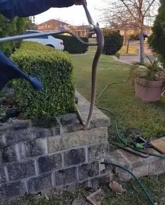 蛇出沒注意:墨爾本天氣變暖,蛇群提前结束冬眠-澳洲唐人街