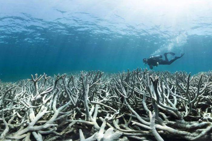 终于,昔日美丽的大堡礁有望回归了!-澳洲唐人街