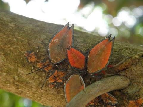 澳洲居民出門時發現棵怪樹,密密麻麻長滿五顏六色的葉子,走近一看瞬間頭皮發麻-澳洲唐人街