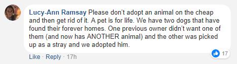 僅在本週末:$29就能把小動物領養回家-澳洲唐人街