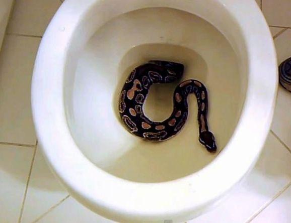 死神在側!澳男遭遇劇毒響尾蛇,一動不敢動嚇出一身冷汗-澳洲唐人街