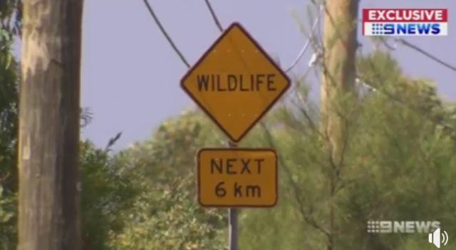 澳洲花750萬澳元專門給動物修一座橋-澳洲唐人街