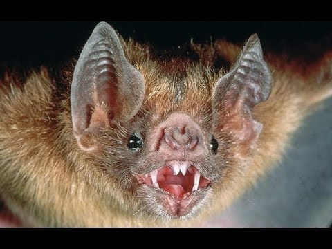 Why do bats carry so many viruses and they can still live well?
